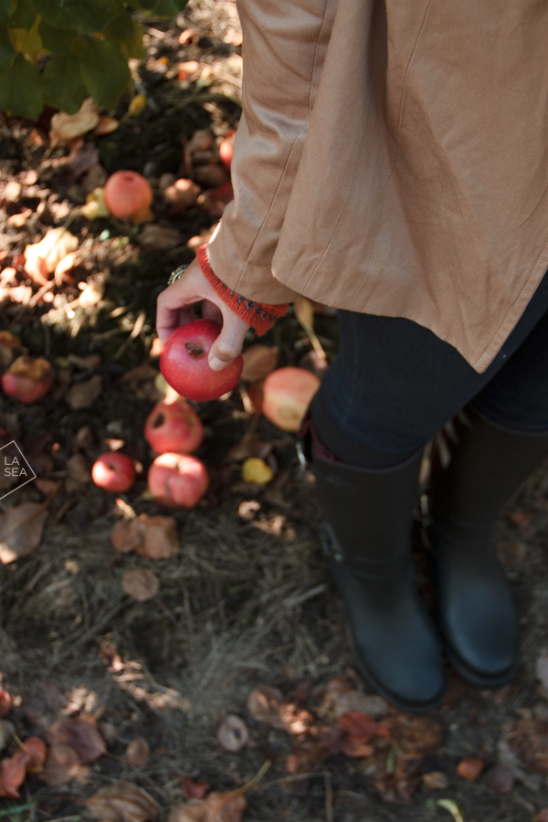 ( Apple picking // Jones Creek Farms )
