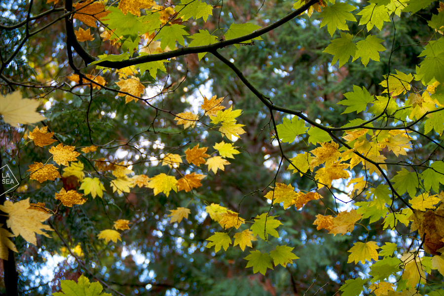 ( Fall 2011 // Washington Park Arboretum )